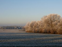 bushes in the cold by Mittelfranke