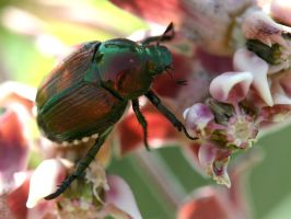 Milkweed Has The Best Bugs by parrotdolphin