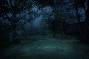 FREE STOCK IMAGE - Midnight Forest by kevron2001