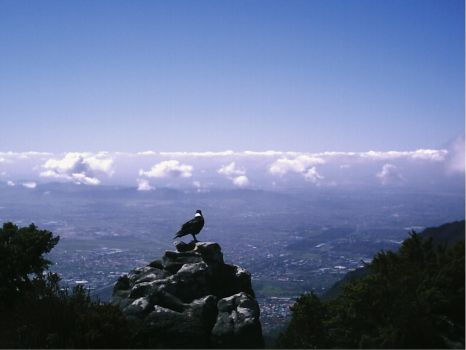 Another Bird on Table Mountain by emmaclairemercedes