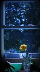Window Sill by EndeavourForever