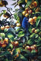 Blue Bird in Crabapple tree by RSF24