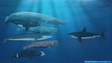 Whales and Megalodon by SameerPrehistorica