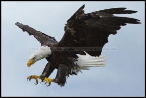 Diving For The Kill by nitsch