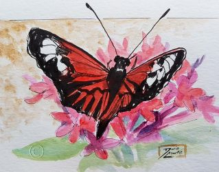 World Watercolor Month - Day 15 (Red Butterfly) by Harmony1965