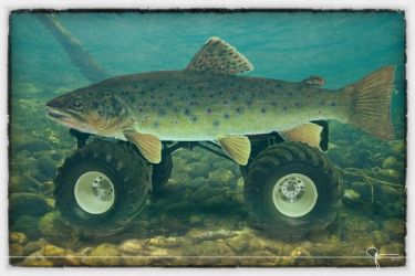 MonsterTrout by scottie32