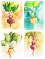 Portrait of a Beet - Collection by FloralFawn