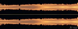 Firs Top Sunset Audio Waveform by LeWelsch