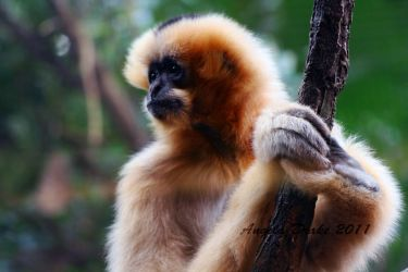 Monkey See by Abiona