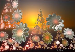 Flowers in the sunset by GLO-HE