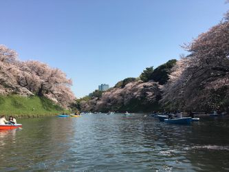 Chidoriga-Fuchi Park Cherry Blossoms by kevintheman
