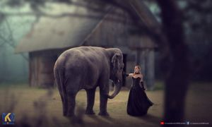 ELEPHANT AND GIRL by rajrkb