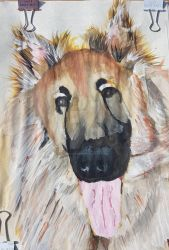Momo the GSD by shayne-kazuto