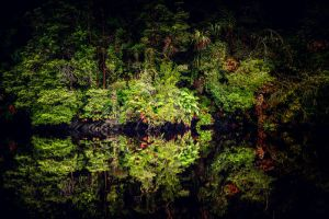 Gordon River Wilderness by Questavia