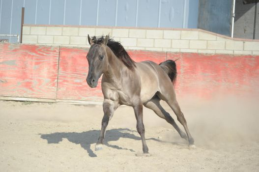 DWP FREE HORSE STOCK 260 by DancesWithPonies