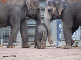 Mali in the Middle by daniellepowell82