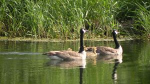 goose 9 by DougFromFinance