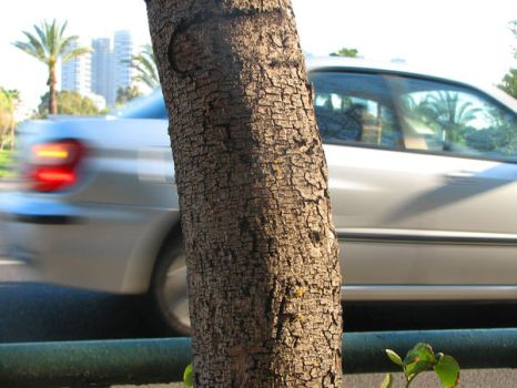 A Car And A Tree by oxymoron81