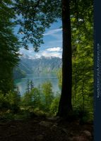 Alpine Lake - Tree - Mountains 02 by kuschelirmel-stock