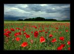 Poppy and Thunderstorm by Hartmut-Lerch