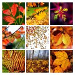 when autumn comes by augenweide