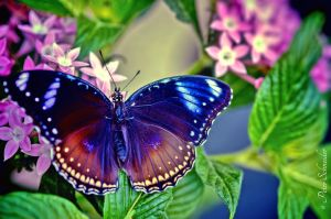 Colour wings (VI). by Phototubby