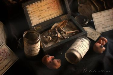 Dubious expedition specimens by dodoalbino