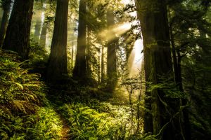 Forest Glory by 5isalive