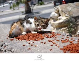 Cats by uhre