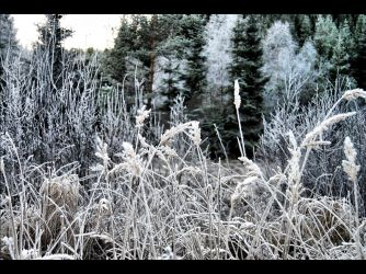 Frozen Forest by ethl