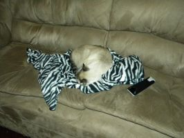 Oliver and his Snuggie by Busted-Love
