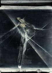 Fly on the windscreen by kubicki