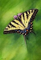 Swallowtail butterfly by LucieOn