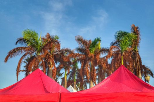 PalmsAndCanopies by ecfield