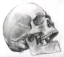 Possibly Human Skull by PixelTribe