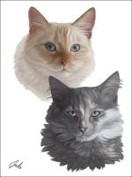 Cats by chipset