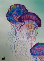 Jellyfishes by Shroggy