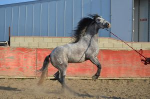 DWP HORSE STOCK 223 by DancesWithPonies