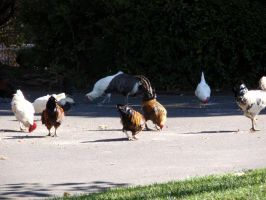 Folsom City Zoo Photo Series 1 by lilly-peacecraft