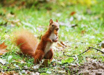 Autumn Squirrel by ladyang