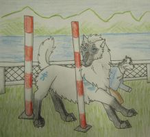 Winter Agility-Continuous Events 1 by taikunfoo