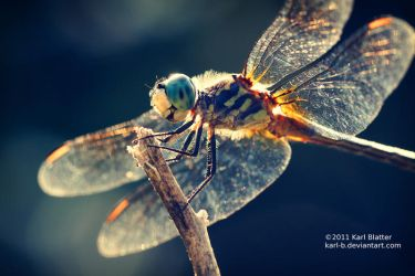 Dragonfly by Karl-B