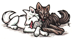 Larka White Wolf And Friend by WildSpiritWolf