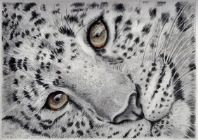 Cheetah drawing by Larry-the-cucumber