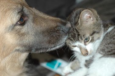 a cat and a dog by Ron-O