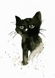 Inky kitten  by peterfrancisfahy
