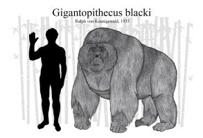 Gigantopithecus blacki (Updated) by RhysDylan01