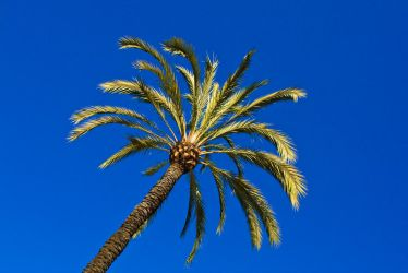 Palm by PeterZen