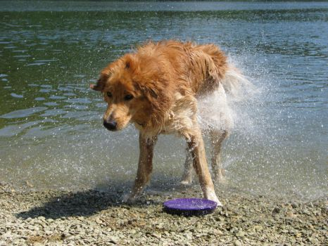 Water loving dog by LS0901