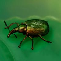 2011031 another beetle by Trutze
